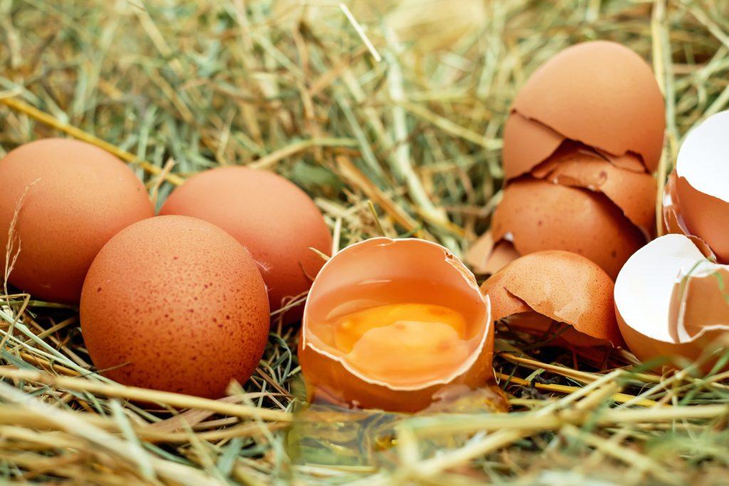 Eggs, benefits, choline, brain,
